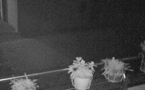 D-Link DCS-2332L - Kamerabild Webinterface Nacht